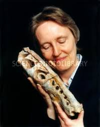 Angela Milner, British palaeontologist. C011/2911 Rights Managed. View low-res. 530 pixels on longest edge, watermarked. Request/Download high-res file - C0112911-Angela_Milner,_British_palaeontologist-SPL