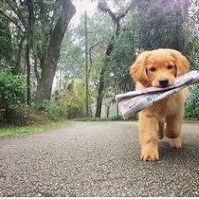 Animale: лучшие изображения (29) | Милые щенки, Милые ...