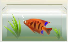 draw fish tank