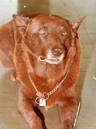 <b>Red</b> Dog. The <b>real</b> story. - <b>Photos</b> | Facebook