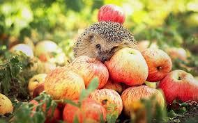 Rsultat de recherche dimages pour pomme humour