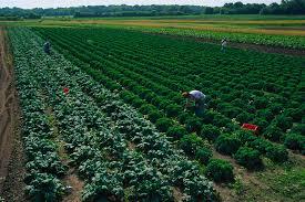 atina diffley middot press kit kale harvest organic farming works