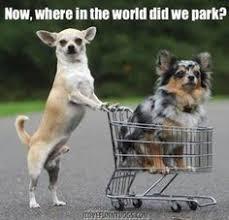 Dog Memes on Pinterest | Dog Sleeping, Dogs and Fluffy Dogs via Relatably.com