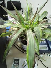 「枯萎植物」的圖片搜尋結果