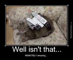 Are You Kitten Me Right Meow Memes. Best Collection of Funny Are ... via Relatably.com