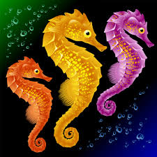 Image result for images of a seahorse