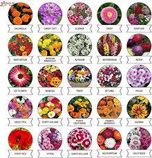 Kraft Seeds Varieties of <b>Summer Flower</b> Seeds (Multicolour, Pack of ...