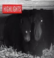 <b>Live Black</b> Bear Cam | HDOnTap.com