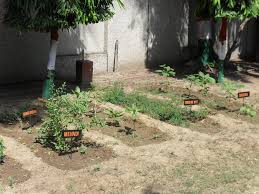 welcome to s g p developing medicinal plants gardens in the schools and colleges of new delhi