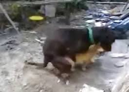 Insane Porn Videos / Bestiality Dog Tube / Most popular Page 1