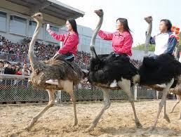 نتيجة بحث الصور عن Shenzhen Safari Park