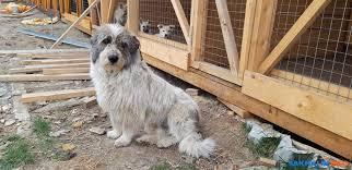 """Приюту для бездомных животных """"Пес и кот"""" нужны <b>сухие корма</b> ..."""