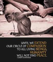 Animal Cruelty Quotes on Pinterest | Animal Rights Quotes, Stop ...