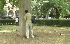 Risultati immagini per immagini roma pipi albero