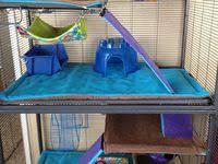 Rat <b>cage</b> ideas: лучшие изображения (103) | Домашние крысы ...