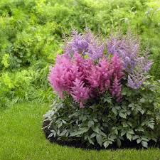 Small Picture Perennial Flowers for Shade Gardens Perennials Plants and Gardens