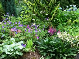 Small Picture peonies landscaping ideas photo gallery for Perennial