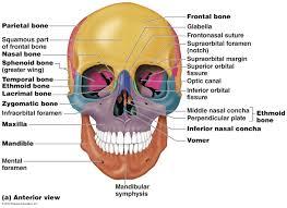 human anatomy essays anatomy essays bro tech