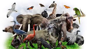 Resultado de imagem para animals and birds