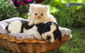 """Résultat de recherche d'images pour """"petits chien et chats"""""""