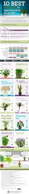 top house plants for clean indoor air the healthy home economist 10 best houseplants to improve indoor air quality