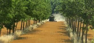 Image result for Agroforestry in france