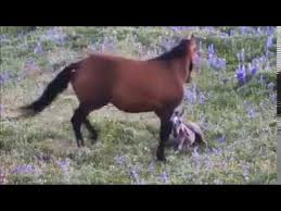 <b>Mother Horse</b> Protects Newborn Foal - YouTube