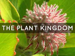 plant reproduction essay questions  homework service plant reproduction essay questions plant reproduction essay questions
