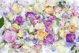 <b>Lovely Flowers</b> – trendy wall mural – Photowall