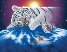 Afbeeldingsresultaat voor witte tijger wallpaper