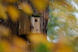Where To Put A <b>Bird</b> Box   Nestboxes - The RSPB