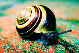 <b>Snail Slime</b>