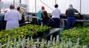 master gardener training extension master gardener below is an update from james quinn regional horticultural specialist university of missouri extension the help of james leadership