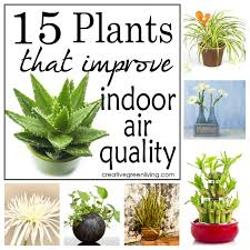no matter how green your purchases most of us are still exposed to vocs in our home and at work this is where indoor plants best office plants no sunlight