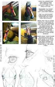 drawing art draw animal skeleton anatomy horse reference tutorial drawing art draw animal skeleton anatomy horse reference tutorial equine horses references skeletal