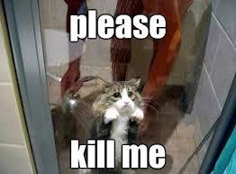 Kill Me: A Classic Meme Gallery - Mandatory via Relatably.com