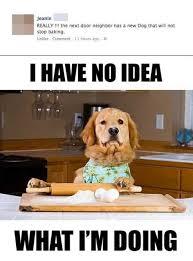 Funny dog meme | Humor | Pinterest | Baking, Dogs and Funny Dog Memes via Relatably.com