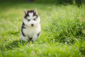 50 <b>Cute</b> Puppies You'll Have to See to Believe – American Kennel ...