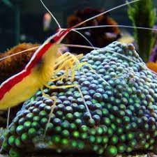 Posts by Marine Fish | Marine, Fish, Export, Live, Ornamental ...