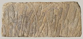 in the new kingdom ca 1550 1070 b c essay heilbrunn ripe barley