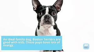 Top 10 '<b>Small</b> Breed' <b>Dogs</b>