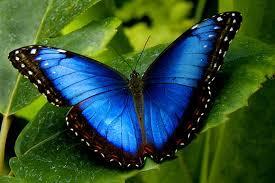 البوم اروع الفراشات images?q=tbn:ANd9GcS