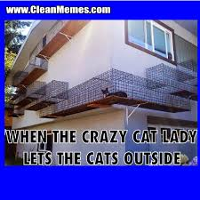 Crazy Cat Lady | Clean Memes – The Best The Most Online via Relatably.com