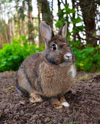<b>Rabbit</b> - Wikipedia