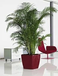 office plants office plants snake plant for amazing office plants in australia with amazing office plants
