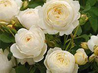 Ivory: лучшие изображения (49) | Свадебные цветы, Букет ...