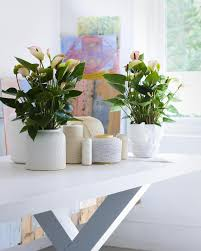 decorations indoor plants decoration ideas charming office plants