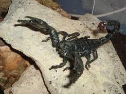 a-skorpio-merge-fajdalomcsillapitokent-hat