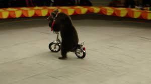 Bears on a bicycle went. Bears went on a bike. Ехали <b>медведи</b> на ...