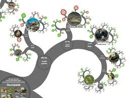 crowdfunding an online tree of life a view from the bridge a branch on the onezoom online tree of life